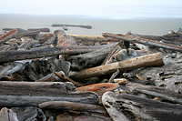 Logs on Beach
