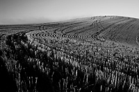 Across the Grain, Cholame Hills, California