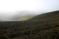 Foggy Slope, Cholame Hills, California