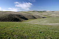 High Rolling Grasslands, Cholame Hills, California